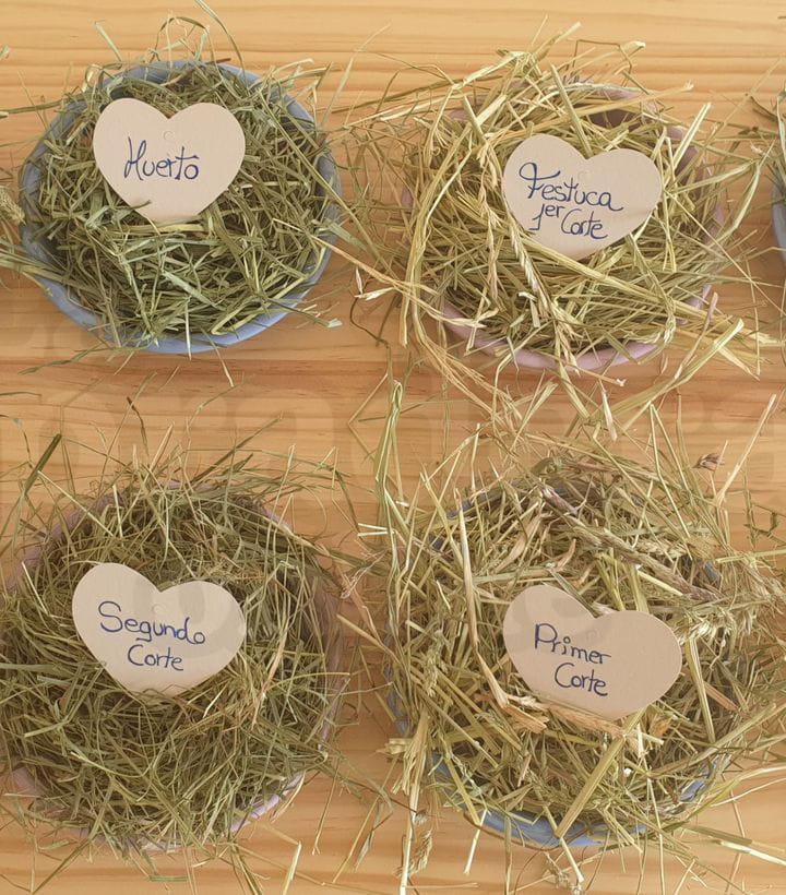 Cómo elegir el mejor tipo de heno para conejos o cobayas   La Pradera Online