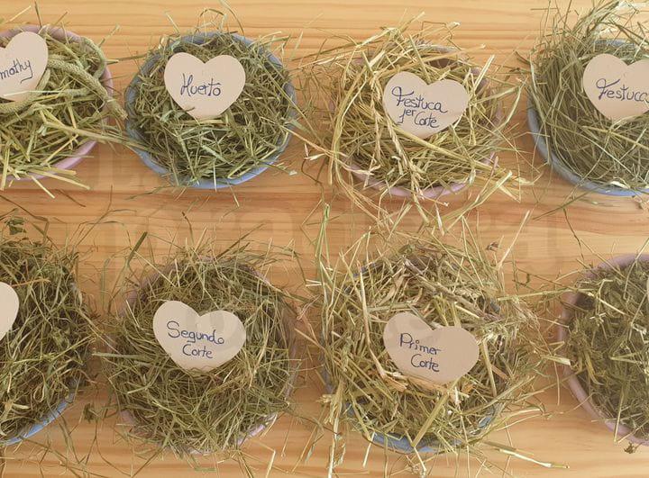Cómo elegir el mejor tipo de heno para conejos o cobayas | La Pradera Online