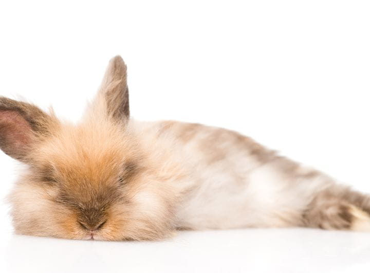 La dieta de los conejos en crecimiento: todo sobre su alimentación