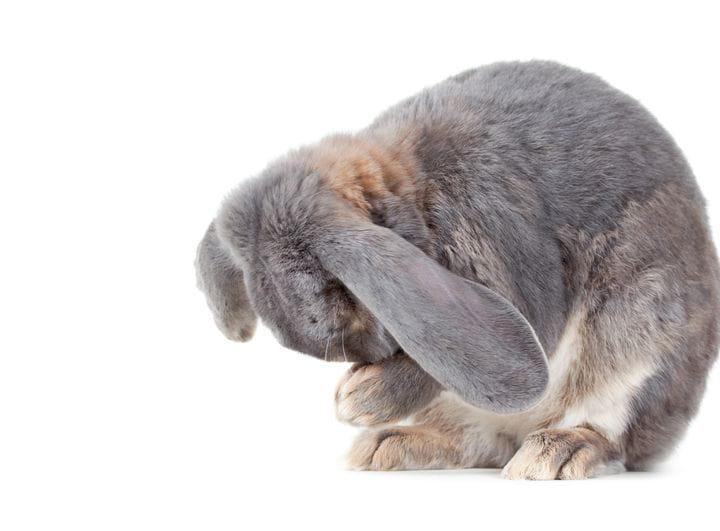 Cómo prevenir y combatir los golpes de calor en conejos