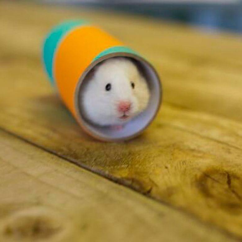 Chew Tube