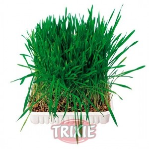Mezcla de hierbas para cultivar - Trixie