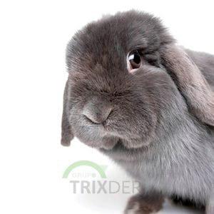 Tarjeta Conejo